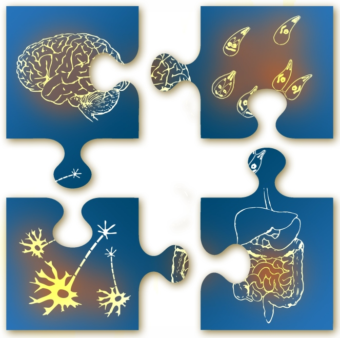 2014-04_thematic-series_brain-gut-jigsaw-crop